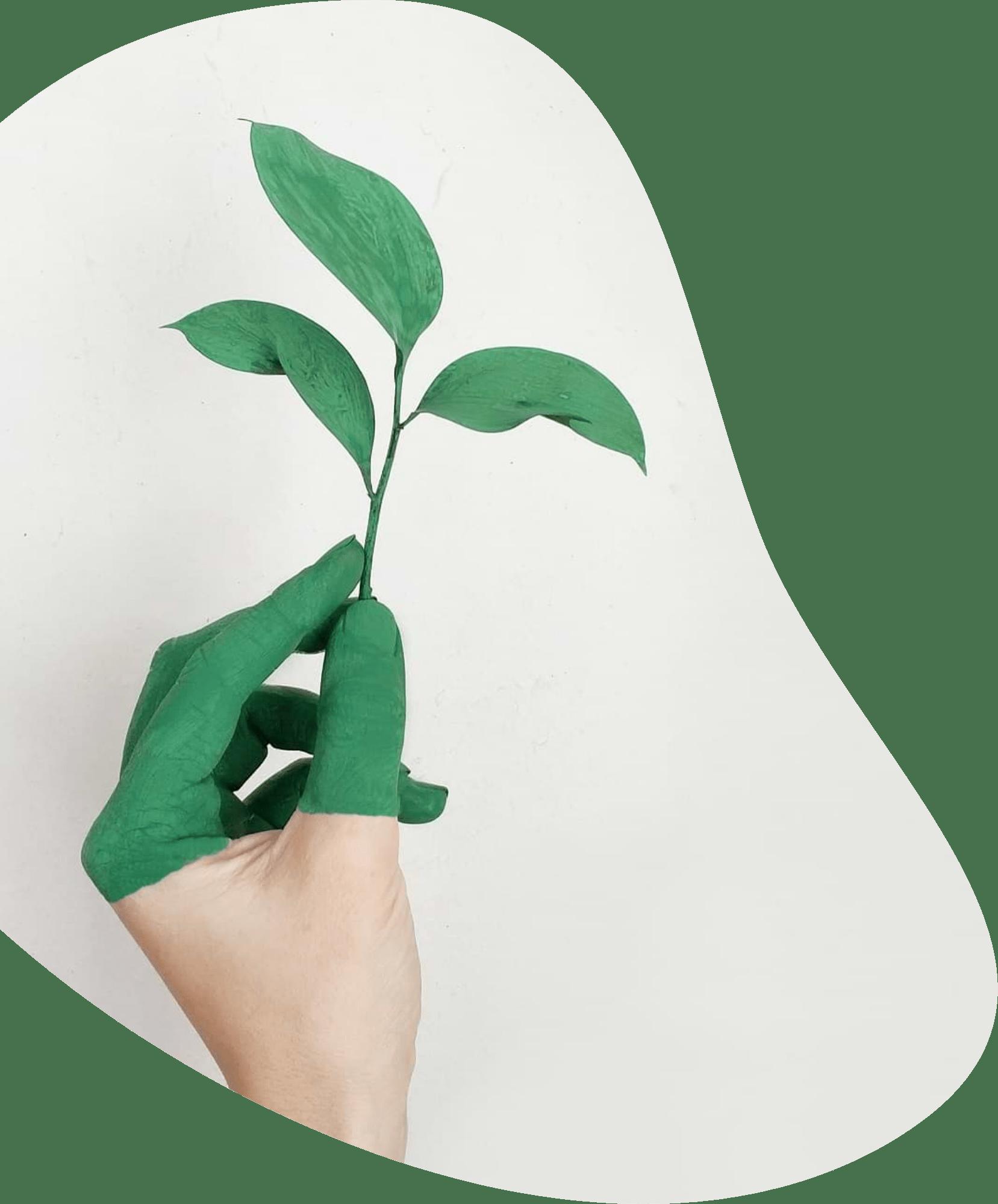 Conseil en Développement Durable