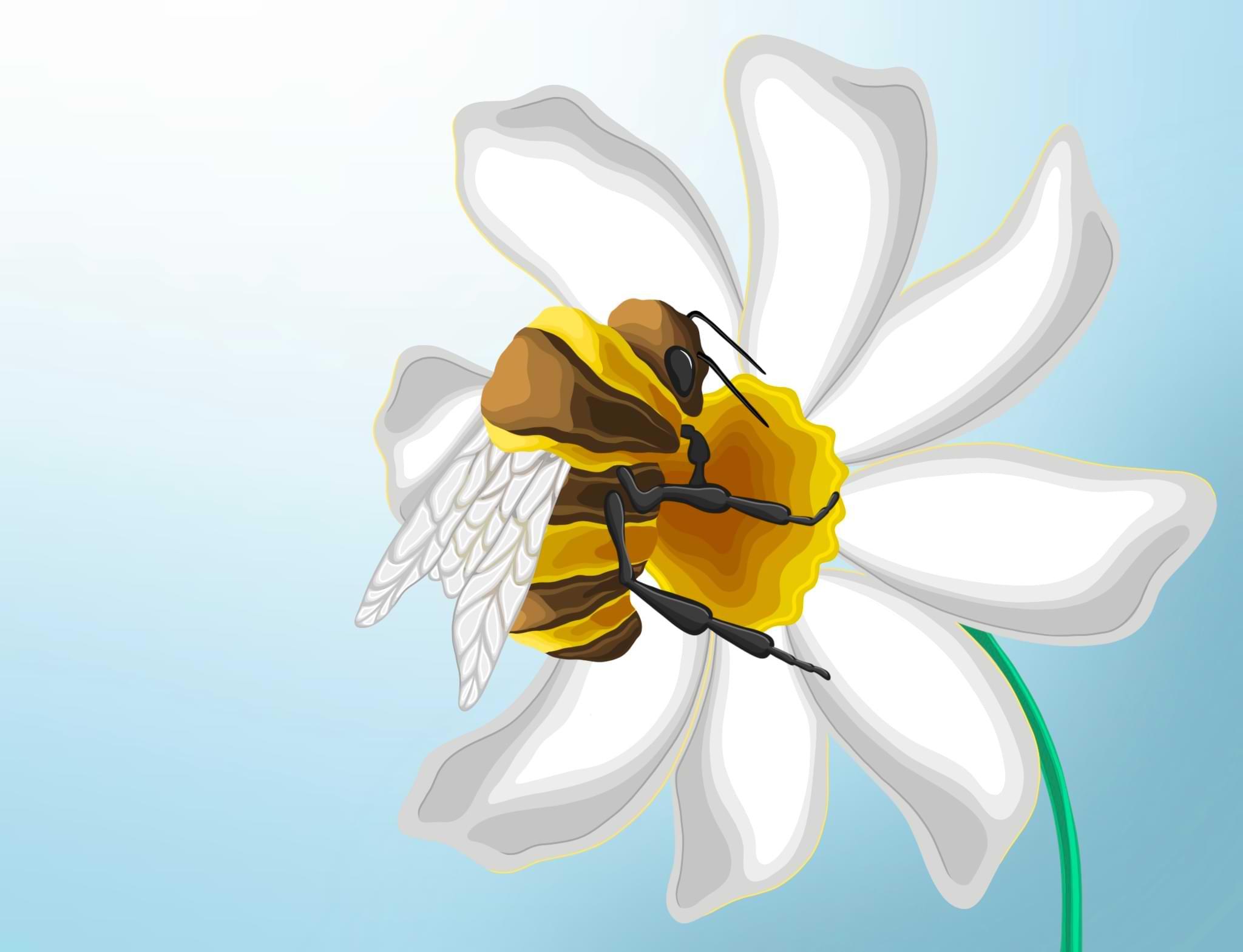 Biodiversité & abeille